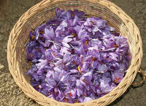 gew rzseiten safran crocus sativus. Black Bedroom Furniture Sets. Home Design Ideas